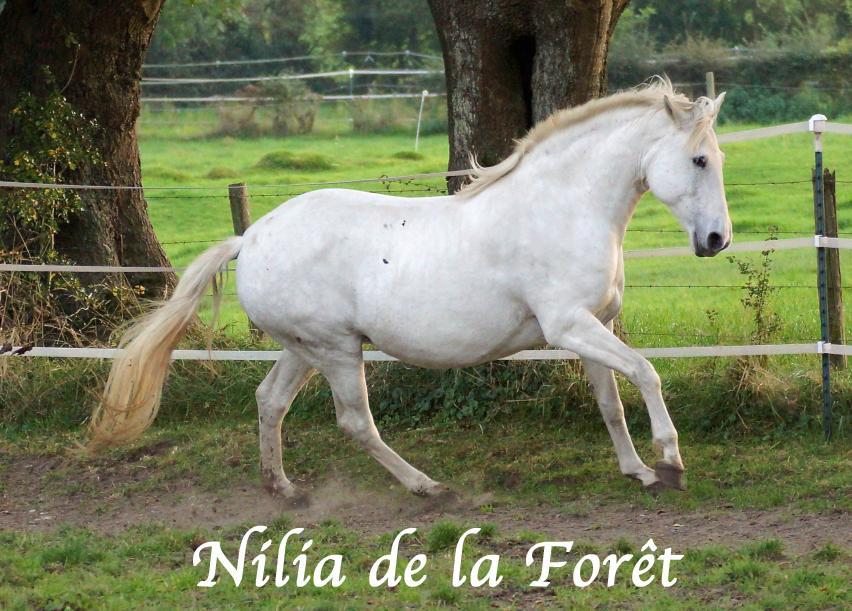 Nilia de la Forêt