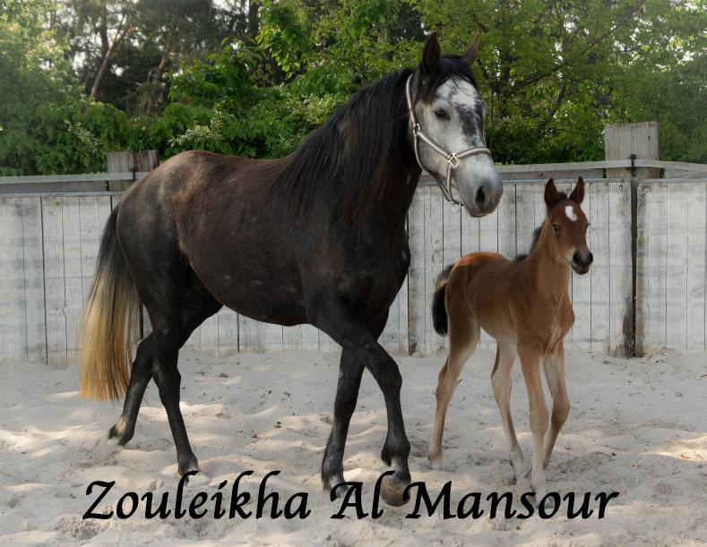 Zouleikha
