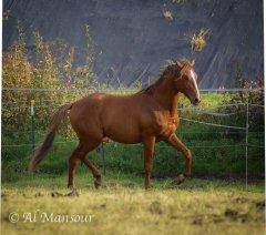 chergui_2014-10_05415.jpg