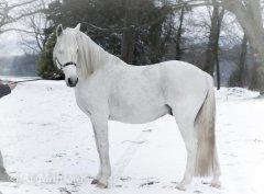 igadir-neige-2018-1.jpg