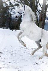 igadir-neige-2018-6.jpg
